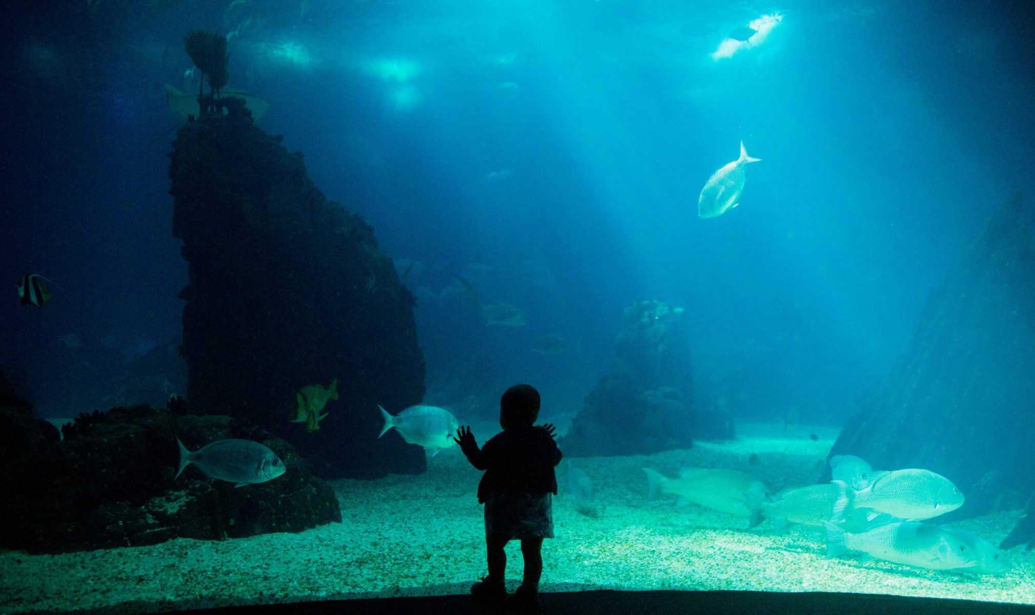 Como e quando oferecer o peixe ao bebé?
