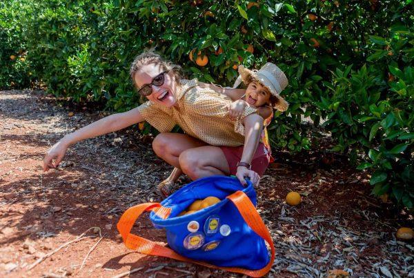 laranja do Algarve